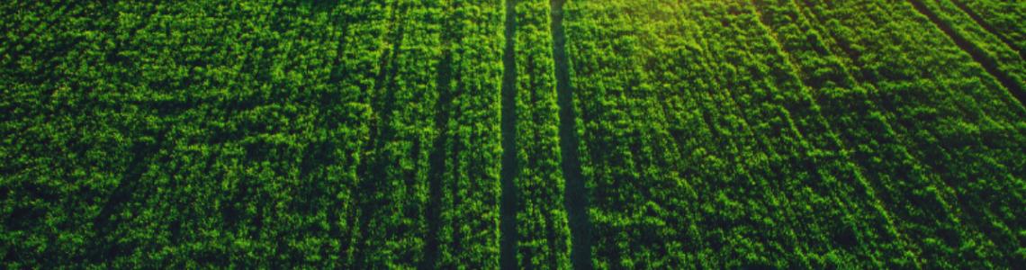 Pesticide - Protectia plantelor